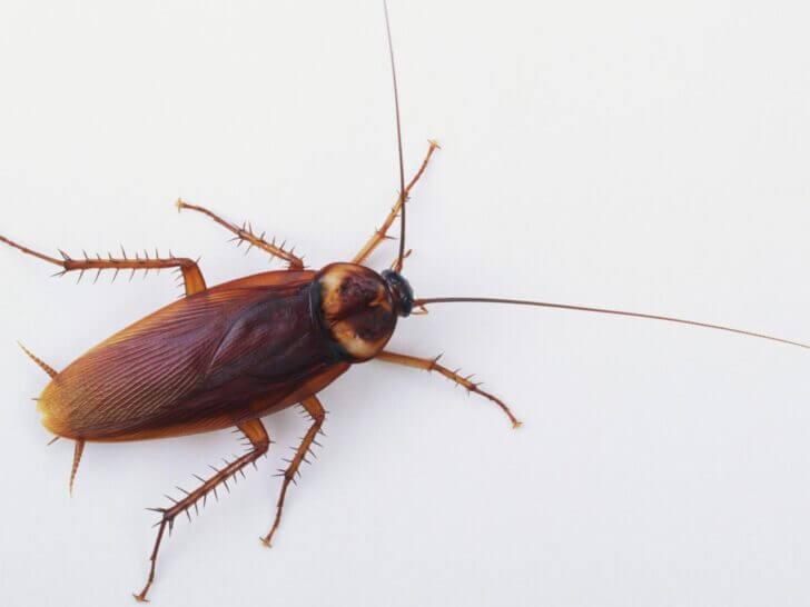 10. Cockroaches