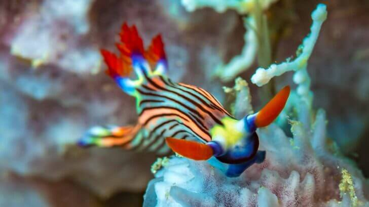 2. Nudibranch   Most Beautiful Fishes in World