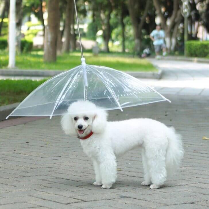 4. Dogbrella