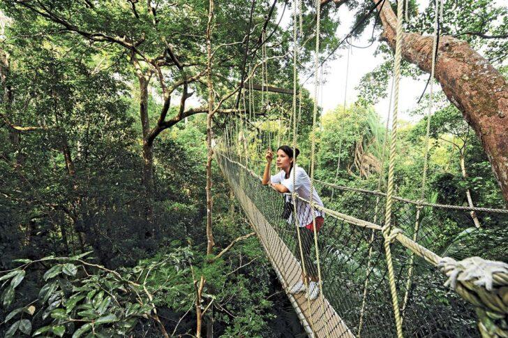 5. Taman Negara National Park Bridge, Malaysia