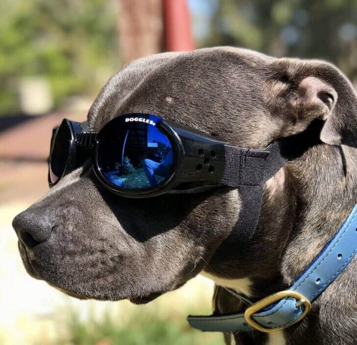 6. Doggles   Best Dumbest Inventions for Dogs
