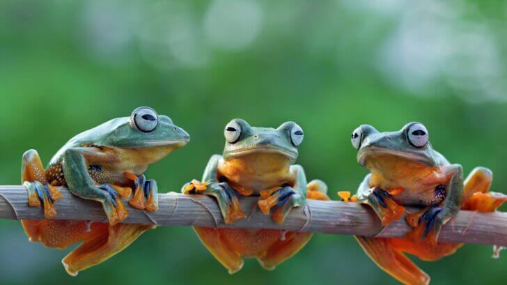 6. Frogs