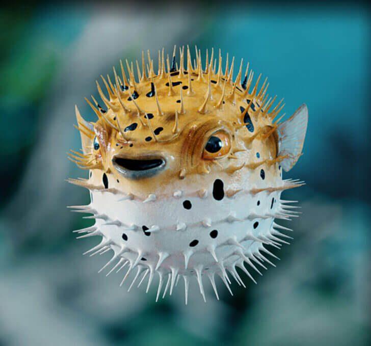 8. Pufferfish