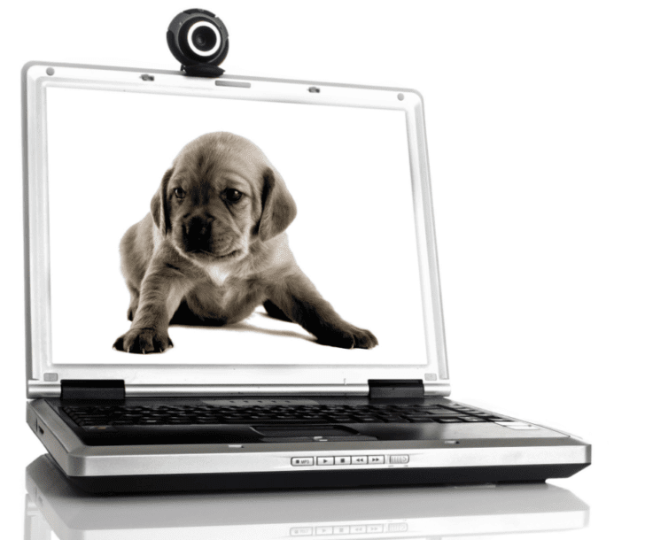 8. Skype With Your Dogs   Best Dumbest Inventions for Dogs