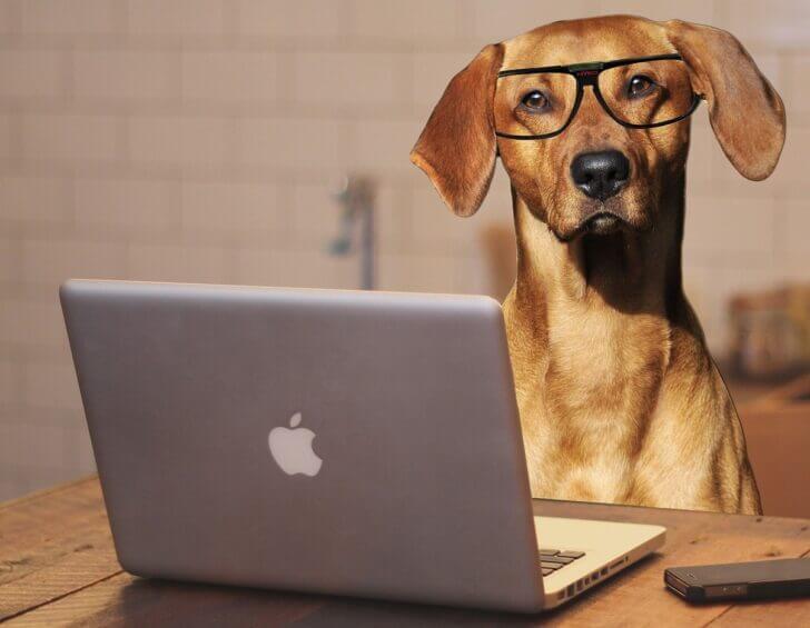 9. Doggie Laptop