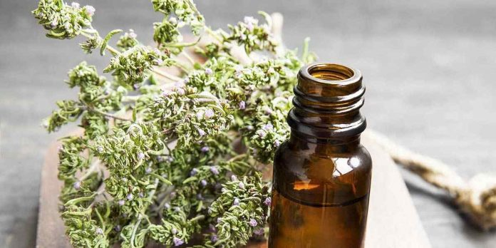 Best Thyme Oil Health Benefits and Uses