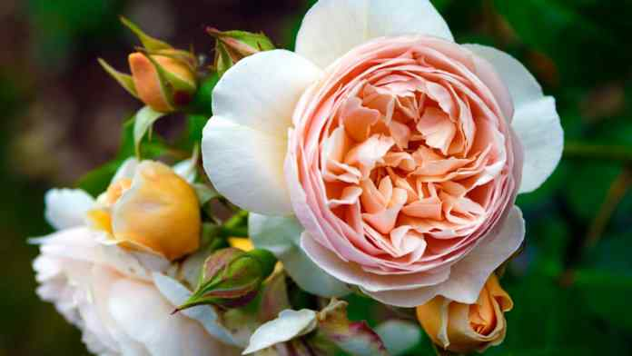 most expensive flowers in the world