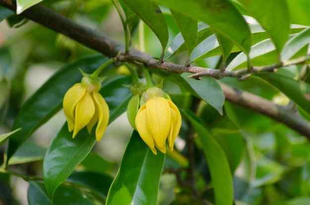 Best Ylang Ylang Perfumes For Women