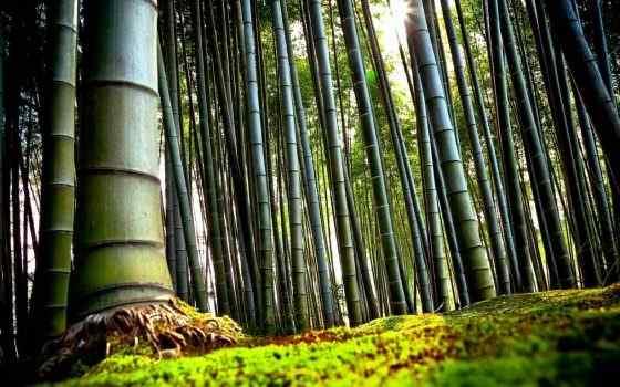 Best Bamboo Women Perfumes