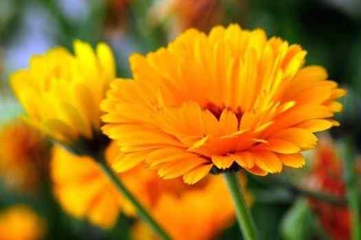 Best Marigold Women Perfumes