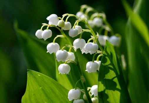 Lily of the Valley Perfumes For Women